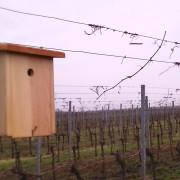 Vogelnistkasten im Weingarten